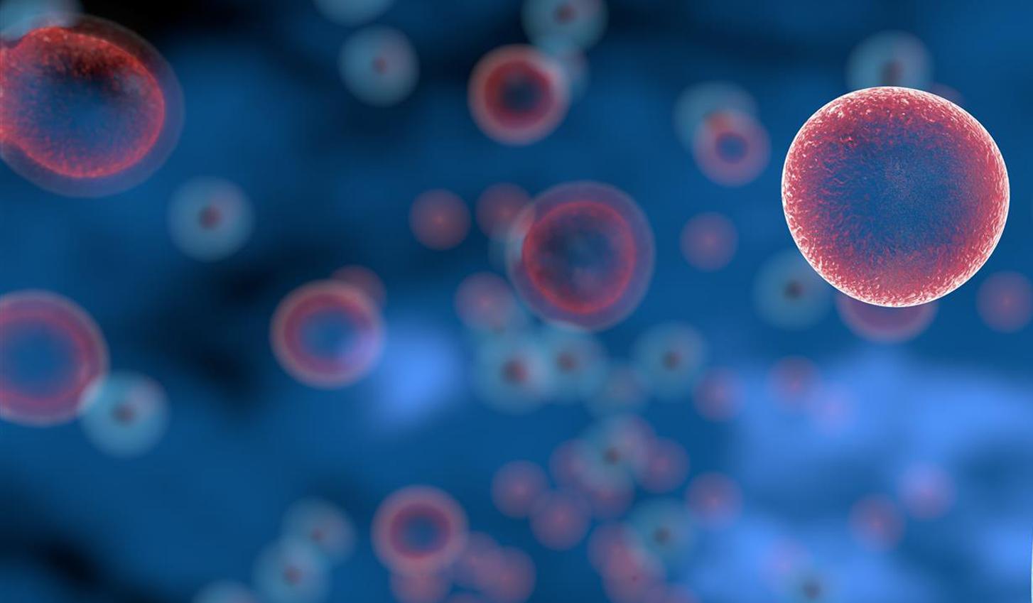 Tecentriq® kompensavimas pirmos eilės mnslpv gydymui